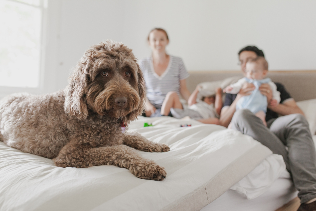 Home Lifestyle Photography includes pets too.